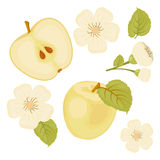 Apple En uppsättning av beståndsdelar En skiva av Apple Blomma Vit bakgrund Arkivbild