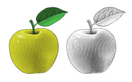 Apple in engraving style Royalty Free Stock Image