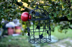 Apple escapes from the Cage Royalty Free Stock Image
