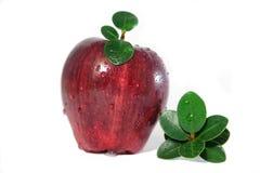 Apple et feuilles Image libre de droits