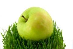 Apple et herbe images stock