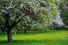 Apple et jardin d'herbes aromatiques Photo stock