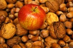 Apple et noix Image stock