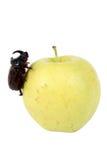 Apple et une anomalie images stock