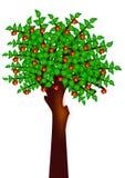 Apple euroträd Arkivbild