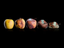 Apple. The evolution of the apple to death Stock Photography