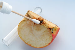 Apple experiment. Medical test on apple. Biology experiment Royalty Free Stock Image