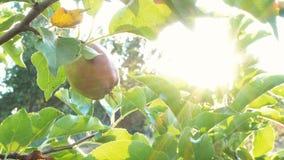 Apple fa il giardinaggio alla luce del sole video d archivio