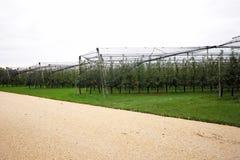 Apple fa il giardinaggio in pieno delle mele Fotografia Stock
