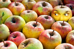 Apple with face. One yellow apple with face looking at the heap of ordinary ripe apples royalty free stock photography