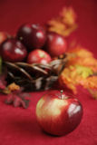 Apple in fall Stock Photo