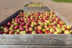 Apple Farm Royalty Free Stock Photos