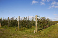 Apple Farm in New Zealand royalty free stock photography