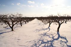 Apple farm on winter with blue clouds Royalty Free Stock Image