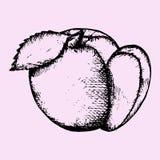 Apple, fatia de maçã Fotos de Stock