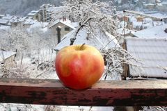 Apple on the fence from the terrace royalty free stock photography