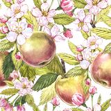 Apple fiorisce l'illustrazione senza cuciture disegnata a mano dell'acquerello del modello Fotografia Stock Libera da Diritti