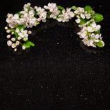 Apple fleurissent des branches sur la partie supérieure du comptoir de granit de galaxie d'étoile Photo stock