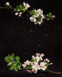 Apple fleurissent des branches sur la partie supérieure du comptoir de granit de galaxie d'étoile Photographie stock