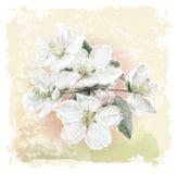 Apple fleurissent des fleurs Image libre de droits