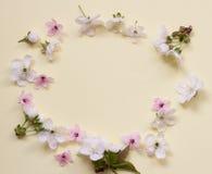 Apple fleurissent le cercle de fleur au-dessus du fond rose-clair Photos stock