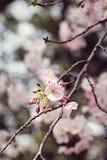 Apple fleurissent macro photographie Photo libre de droits
