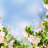 Apple floral background Royalty Free Stock Photography