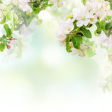 Apple floral background Stock Photos