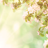 Apple floral background Stock Images
