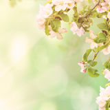 Apple floral background Stock Image