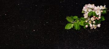 Apple floresce ramos na bancada do granito da galáxia da estrela Foto de Stock