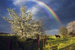 Apple floresce tempestade das nuvens Fotos de Stock Royalty Free