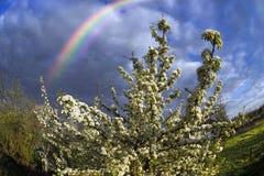 Apple floresce tempestade das nuvens Imagens de Stock Royalty Free