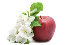 Apple and flower Stock Photo