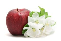 Apple and flower. Red apple and white apple's flower on white background stock images