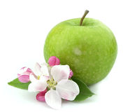 Apple with flower. Close up royalty free stock photo