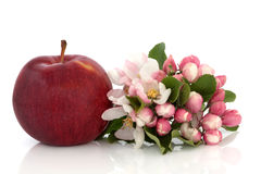 Apple and Flower Blossom. Red apple with spring flower blossom and leaf sprig isolated over white background. Empire variety royalty free stock photography