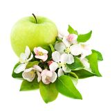 Apple and flower blossom Stock Images