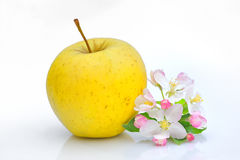 Apple and Flower Blossom Royalty Free Stock Photos