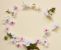 Apple flower blossom circle over light pink background. Stock Photos