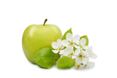 Apple with flower closeup Royalty Free Stock Image
