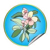Apple flower sticker blue Stock Photo