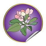 Apple flower sticker violet Stock Photos