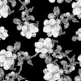 Apple flower,  watercolor, patten seamless, monochrome Royalty Free Stock Photography