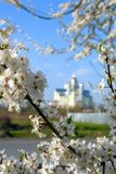 Apple flowers blossom in the spring of a beautiful sunny day stock photography