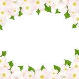 Apple Flowers Border Stock Images