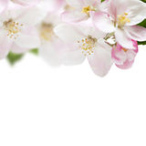 Apple flowers border Stock Images