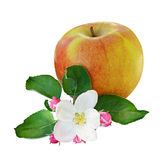 Apple and flowers Stock Photos