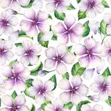 Apple flowers, petals and leaves in watercolor style on white background. Seamless pattern, Art watercolor illustration. Apple flowers, petals and leaves in royalty free illustration