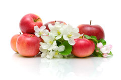 Apple flowers and red apples on a white background Stock Image